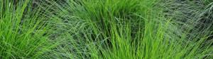 Rasen-Sprenger