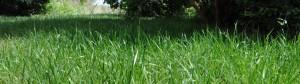 Rasen-Urlaubszeit