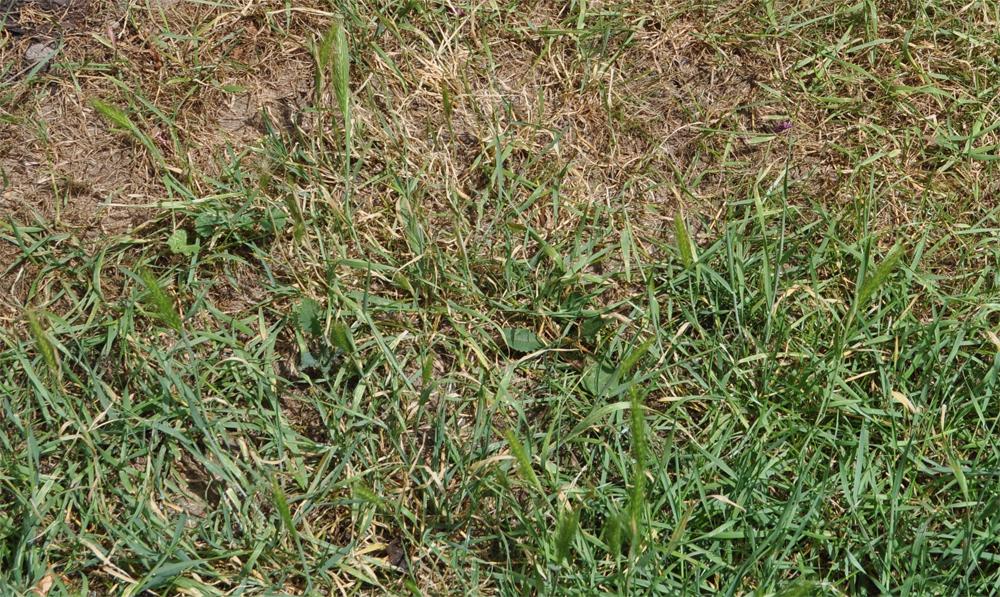 Rasenschäden